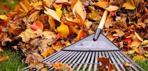 St Hilary's Churchyard Leaf Clearance