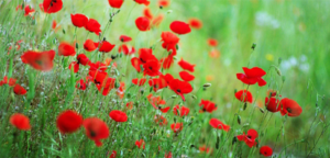 Read more about the article Remembrance 2020